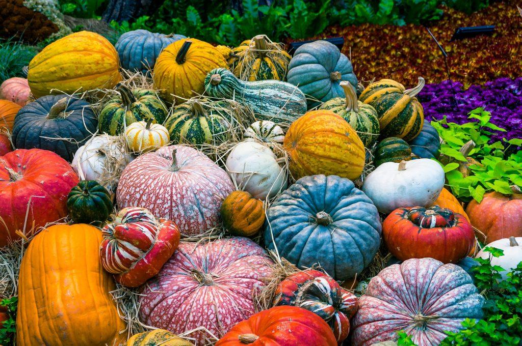 Verschiedene Kürbisarten in Saison Herbst